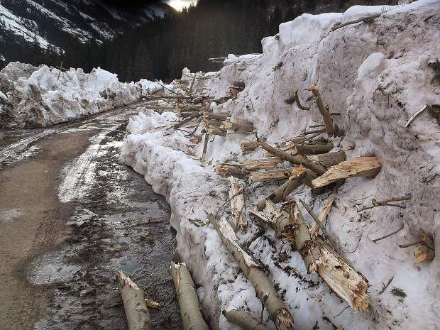 Aspen tree limbs downed by an avalanche protrude from the snowbank after the plowing of Lincoln Creek Road.