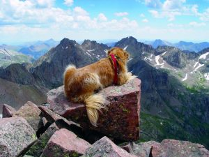Colorado man shares advice for hiking with dogs after summiting almost every 14er with golden retriever