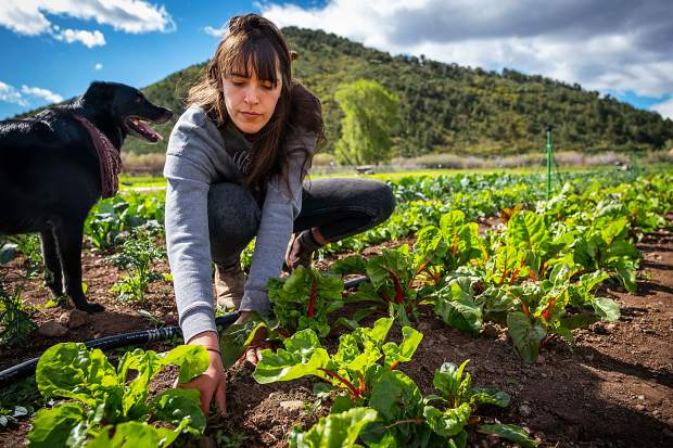 Mikensi Romersa of Two Roots Farm weeds a vegetable patch at the farm's property in Emma.