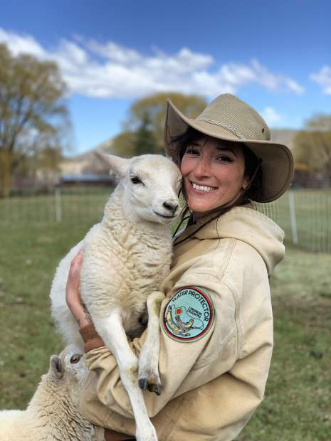 Jennifer Ghigiarelli, leader livestock farmer at Rock Bottom Ranch, holds one of the new lambs this spring.