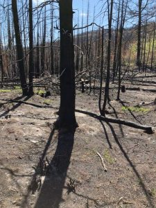 Lake Christine Fire's threat to Basalt, El Jebel isn't gone yet
