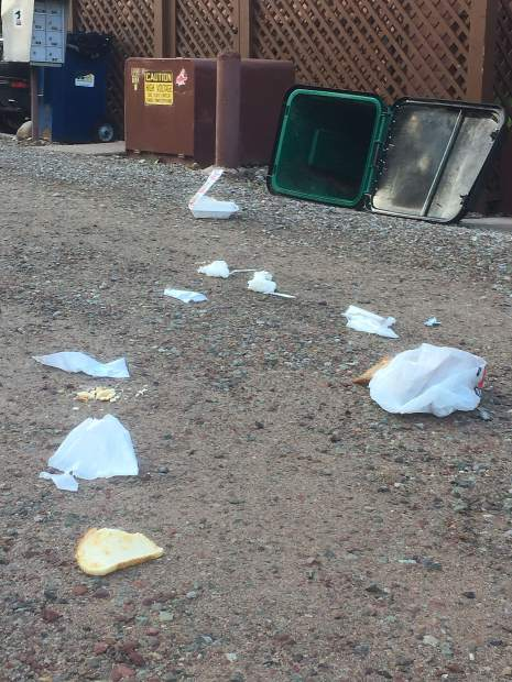 A residential trash can was knocked over by a bear in an alley in downtown Aspen one early June morning.