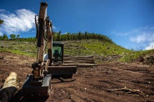 Despite beetle threat, Aspen-area avy debris to remain