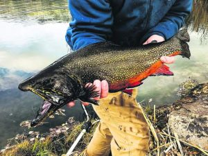 On the Fly: Give fly-fishing a try