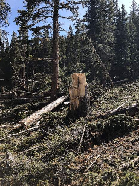 This stump demonstrates the power of the avalanches that struck upper Lincoln Creek Valley. The diameter of the sheered tree exceeded two feet.