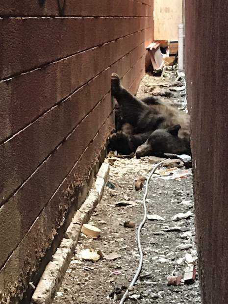 A bear sleeps in an Aspen alley. Colorado Parks and Wildlife said many bear-human conflicts in Aspen are preventable. Humans need to secure all food sources and remove temptation.