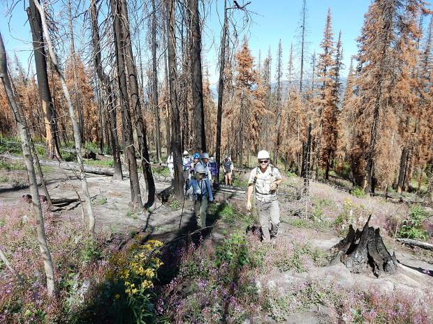 A group attending a fire ecology tour led by ACES picks their way through the burned confier tree trunks and flowers such as fireweed on Basalt Mountain Aug. 14.
