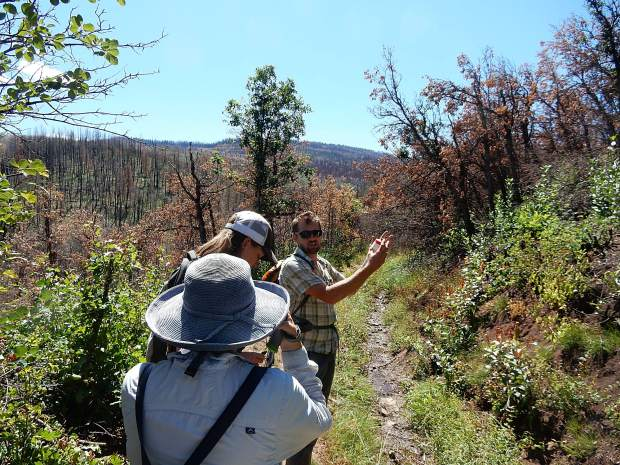 Adam McCurdy of ACES leads a group along the Ditch Trail on Basalt Mountain Aug. 14 while discussing the landscapes recovery from the Lake Christine Fire.