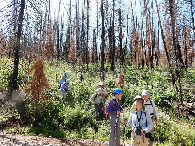 A mix of local residents and part-time residents took a fire ecology tour led by Aspen Center for Environmental Studies on Basalt Mountain Aug. 14. Here they emerge from a part of the forest where vegetation has proliferated.