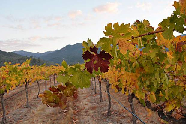 While the vineyards of Napa are beautiful year-round, they may be at their most alluring during the harvest season as the leaves begin to change color