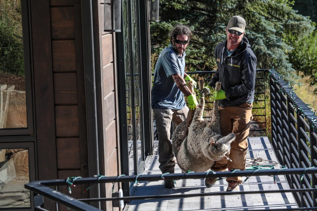 The sheep was transported to a farm in Eagle, where it will be tended to by a vet and given food and water. If the sheep's owner doesn't claim it, then it will stay with its rescuers.