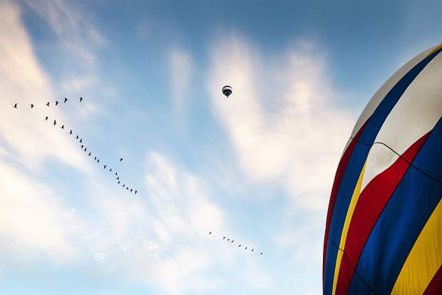 Geese fly in formation over the grounds of the 44th Annual Snowmass Balloon Festival in Snowmass on Friday, September 6, 2019.