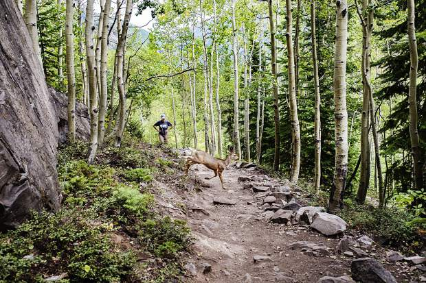 A mule deer crosses the Crater Lake trail as a hiker makes her way up the path on Sunday. Leaf peepers are showing up in the Maroon Lake Scenic Area near Aspen but most leaves have yet to turn.