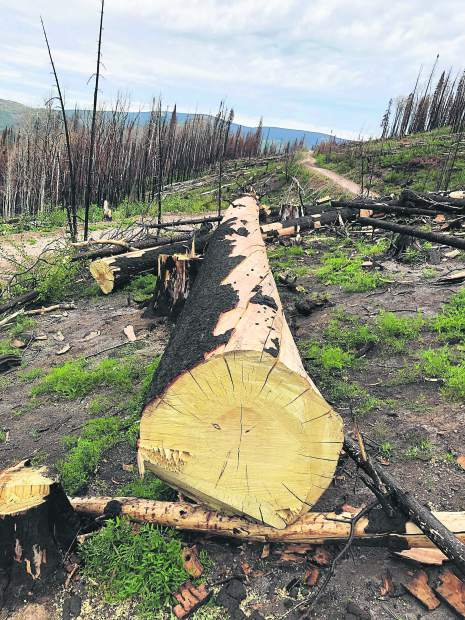 A contractor for the U.S. Forest Service cleared hazard trees within 100 feet of the centerline of Basalt Mountain Road last month.