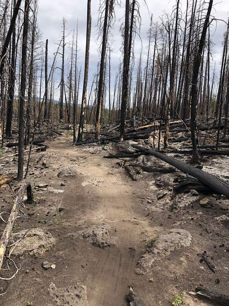 A stretch of the Basalt Mountain Trail on the upper mountain shows pockets remain mostly lifeless after last summer's Lake Christine Fire.