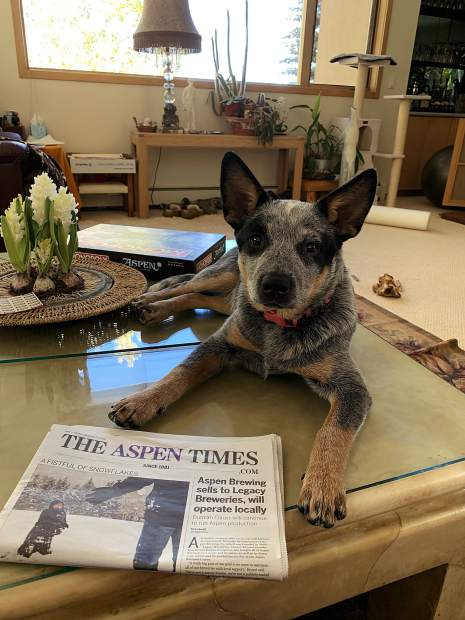 The Lamar couple in Snowmass Village has a new puppy that likes to snooze on the table and wake up to The Aspen Times.
