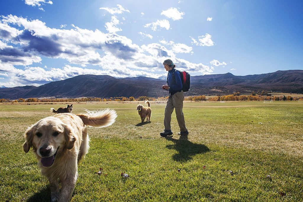 Kathy Denman watches as her two golden retrievers, Sage and Mayah, run through Crown Mountain Park after being joined by another dog in El Jebel on Tuesday. Voters approved a property tax hike last May to maintain and improve the popular park.