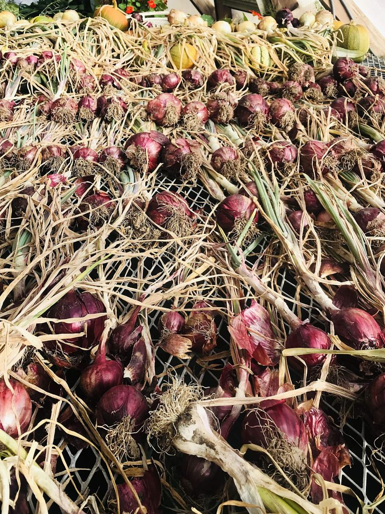 Vegetables dry at the Farm Collaborative after the fall harvest.