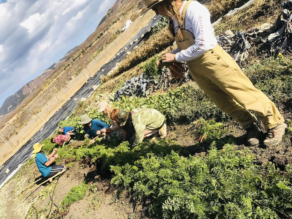 Kids in the Earth Scouts program at the Farm Collaborative work with farmers to harvest crops before the first big frost of the season in late October. Much of it will be included in shares for the Farm-to-Table meal.