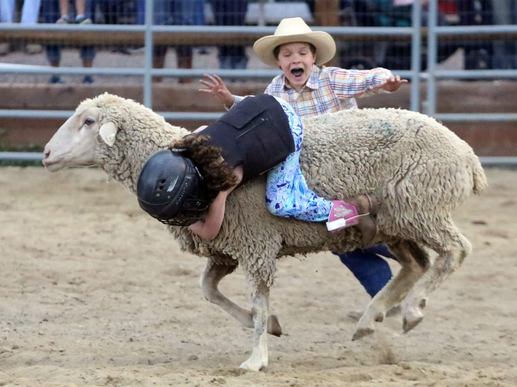 Mutton-busting at the Snowmass Rodeo on Wednesday, July 31, 2019.