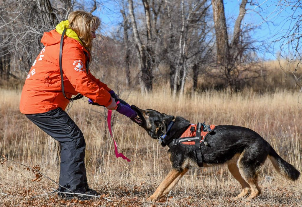 Handler Jody Gruys and her search-and-rescue dog Diesel play tug together after a successful find during a training session near New Castle on Sunday morning.