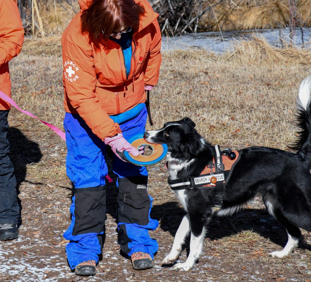 Search-and-rescue dog MacKinsey and handler Wendy Wampler play together after a successful find during training on Sunday morning.