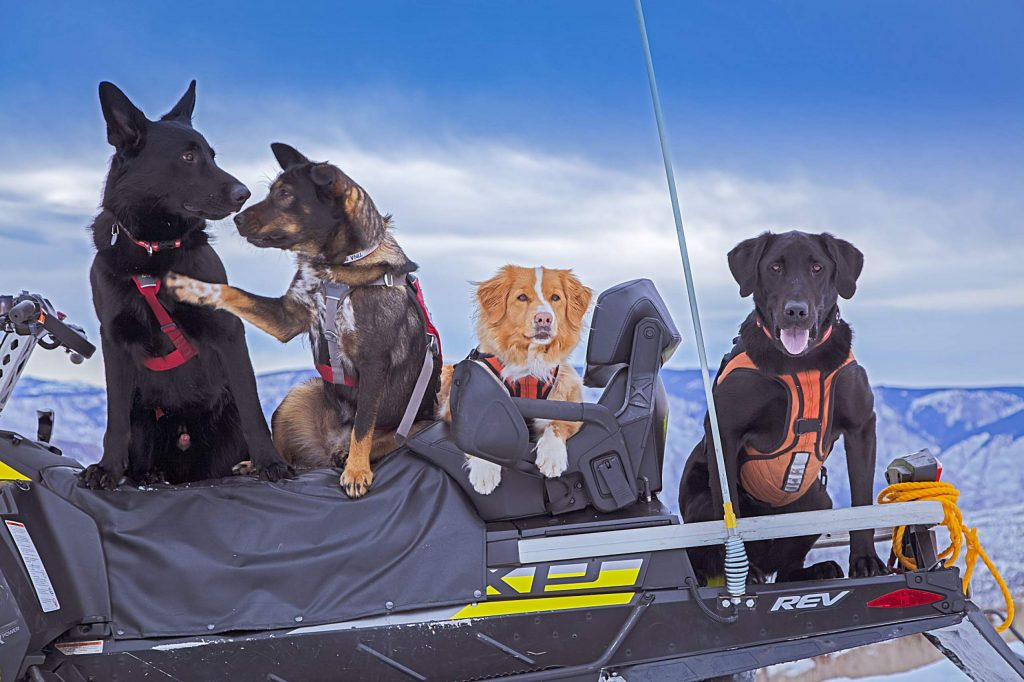 "While capturing an image of the avy dogs on a sled, almost on cue Tina turns to Lando as if to say ""Chicks rule here, dude!"""