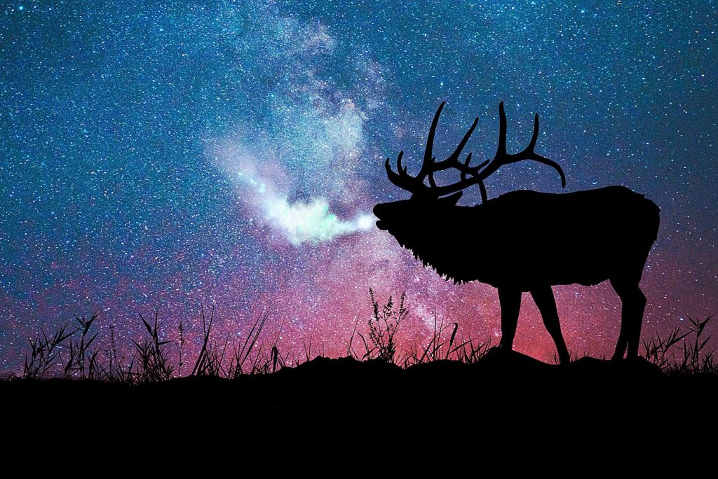 A photo illustration shows a bull elk with the Milky Way in the background.