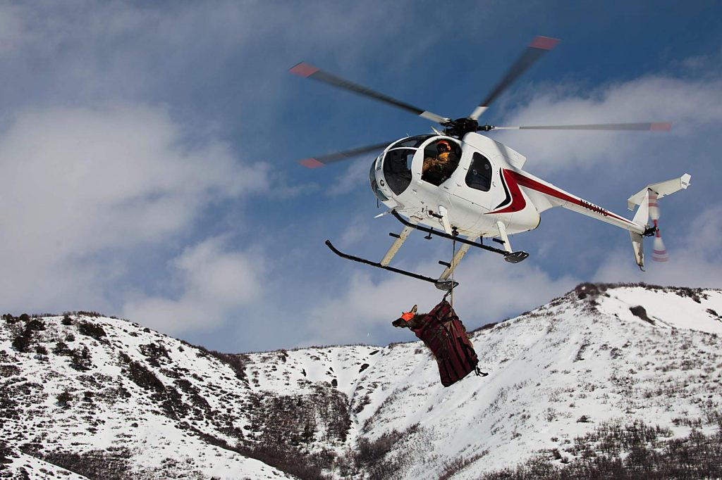 A helicopter flies a pregnant cow elk off of Wildcat Ranch to a staging site in March 2019 where Colorado Parks and Wildlife officers implanted a transmitter for a study.