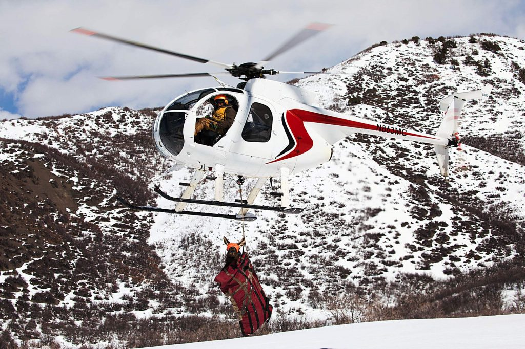 A helicopter crew contracted by Colorado Parks and Wildlife transports a pregnant cow elk in March 2019 as part of a study on calf recruitment.