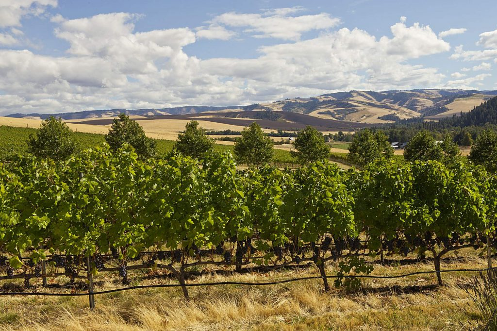 Figgins Estate Vineyard, Walla Walla, Washington