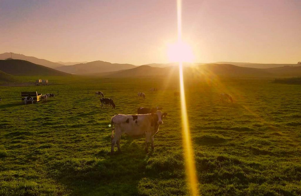 Sonoma Hills Farm is situated on 40 acres of naturally farmed land in the Petaluma Gap.