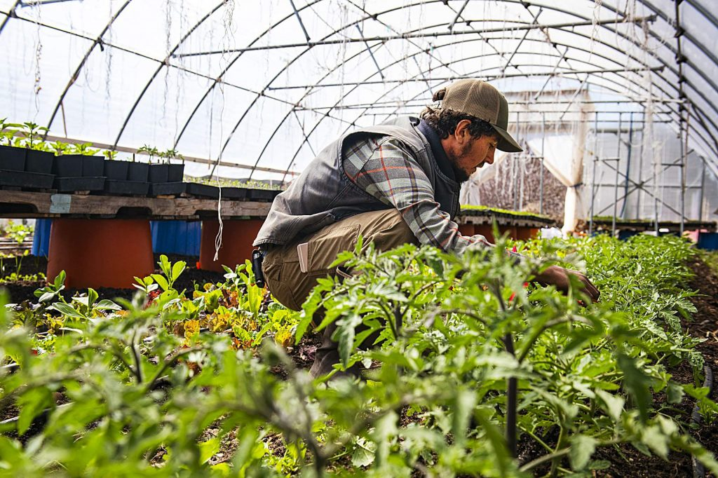 Wild Mountain Seeds farmer Casey Piscura works in the greenhouse in Carbondale on Thursday, April 9, 2020.