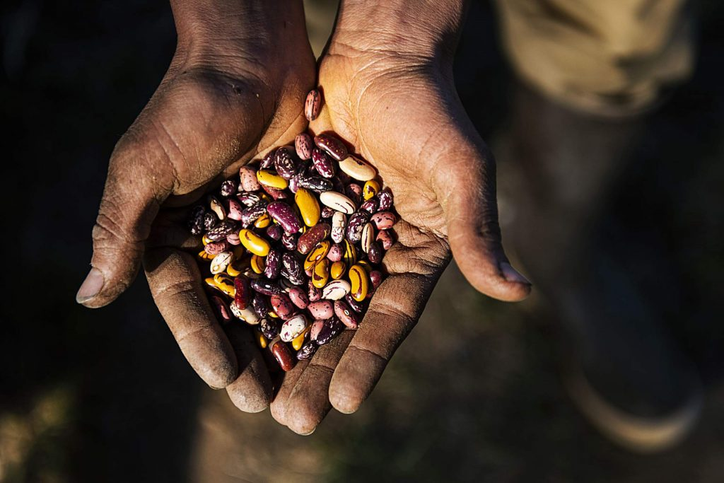 Wild Mountain Seeds farmer Casey Piscura holds a palm full of dry beans at the farm in Carbondale on Thursday, April 9, 2020. Piscura and the others at Wild Mountain Seeds collect, seed save, and breed for the varieties of beans that they want.