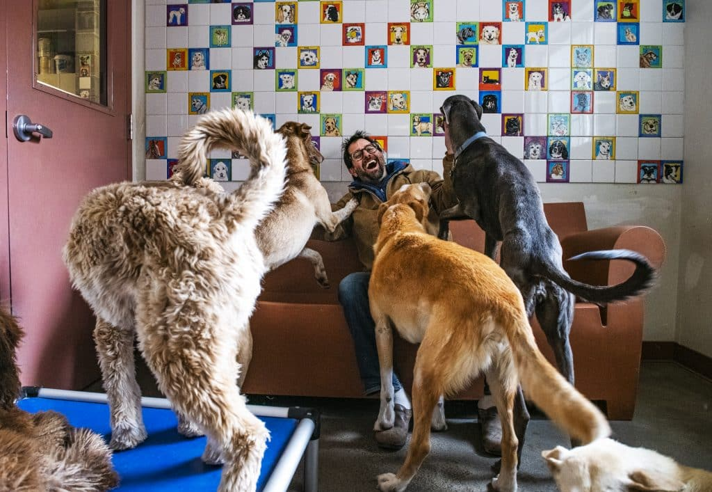"Aspen Animal Shelter director Seth Sachson sits in the office with a number of his dogs on Friday, March 27, 2020. Sachson started working at the Aspen Animal Shelter 28 years ago after he finished college. ""We've gone through 9/11, the recession and this is just insane,"" said Sachson about the current COVID-19 pandemic. ""We went from 100 miles an hour to one mile an hour…even through the coronavirus, we're here standing to take care of the homeless pets that are seeking shelter."" To be respectful of social distancing expectations, the shelter is only doing adoptions through appointments at this time."