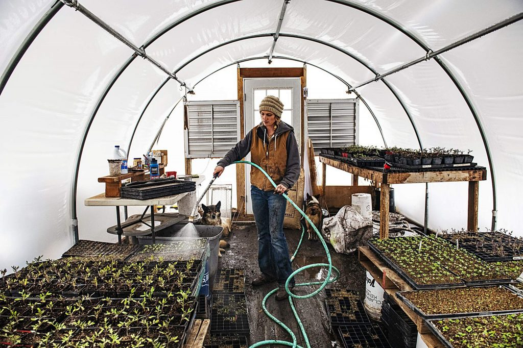 Harper Kaufman of Two Roots Farm waters her plants in one of her greenhouses in Basalt on Thursday, April 2, 2020. (Kelsey Brunner/The Aspen Times)