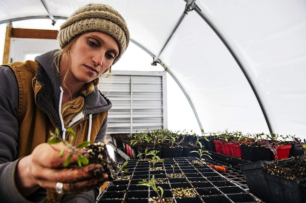 Harper Kaufman plants tomatoes in one of her greenhouses at Two Roots Farm in Basalt on Thursday, April 2, 2020. (Kelsey Brunner/The Aspen Times)