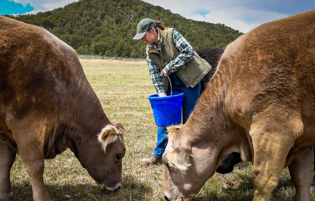 Potter Farms co-owner Justina Potter feeds the cows treats on land owned by John Ward where the cows are currently grazing.