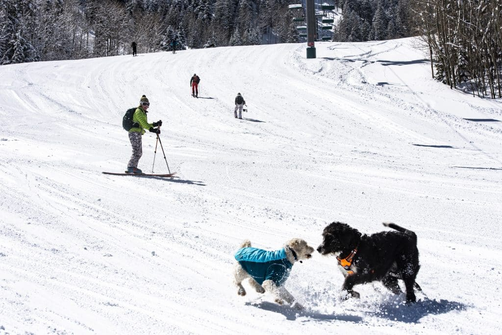 Liz Means, left, watches as her dog plays with an upholders dog as she makes her way back down Aspen Highlands after on a blue bird powder day on Friday, April 17, 2020.