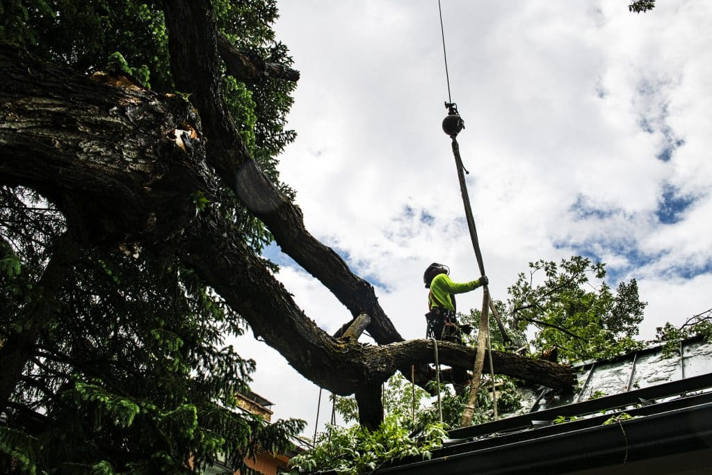Aspen Tree Services arborist Chris DePriest grabs hold of a crane to attach a fallen tree on the roof of a home on East Hopkins Avenue on Tuesday, June 9, 2020.