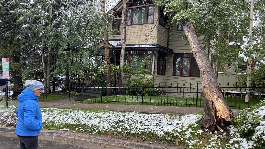 A cottonwood tree fell onto a house on Hopkins Avenue just past 5 a.m. Tuesday, the home owner said.