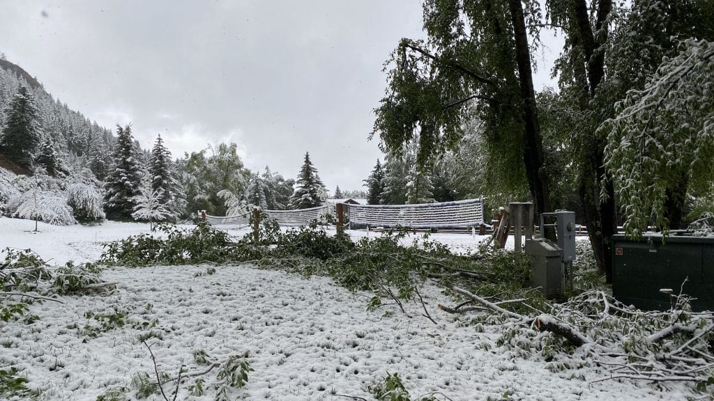 Trees were down in around Aspen on Tuesday morning after a snowstorm rolled through the Aspen area.