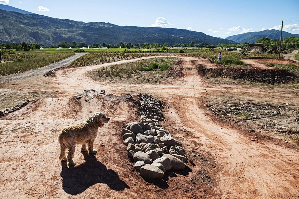 A dog looks out over a dirt track in the new bike park at Crown Mountain Park on Tuesday, June 23, 2020.