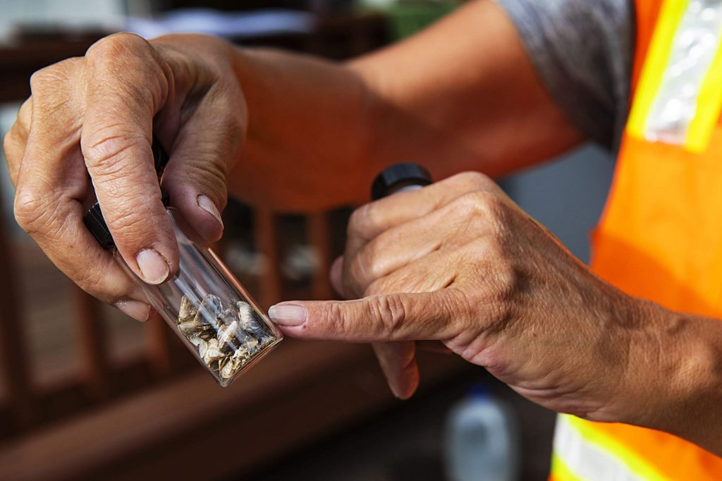 Jaime McCullah points out past samples taken from boats of invasive mussel species at the boat inspection check point at Ruedi Reservoir on Wednesday, July 22, 2020. (Kelsey Brunner/The Aspen Times)