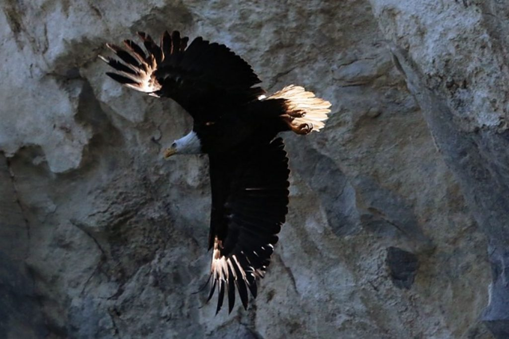 Jack Rafferty snapped a few morning shots of an eagle last week at Ruedi Reservoir.