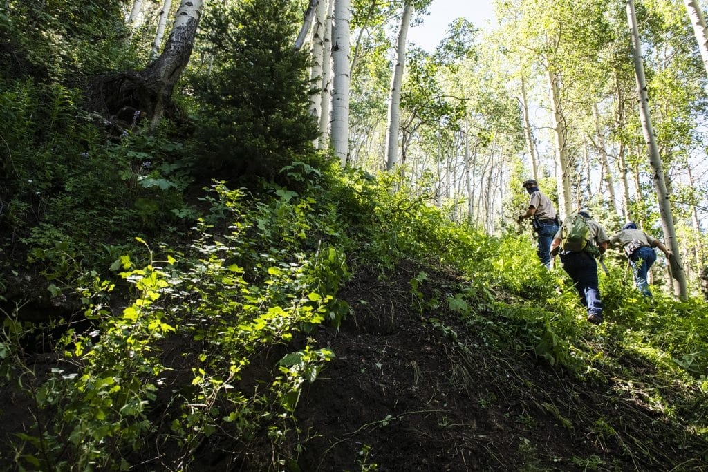 Colorado Parks and Wildlife officers hike out with evidence from a bear suspected of attacking an Aspen man early on Friday, July 10, 2020.