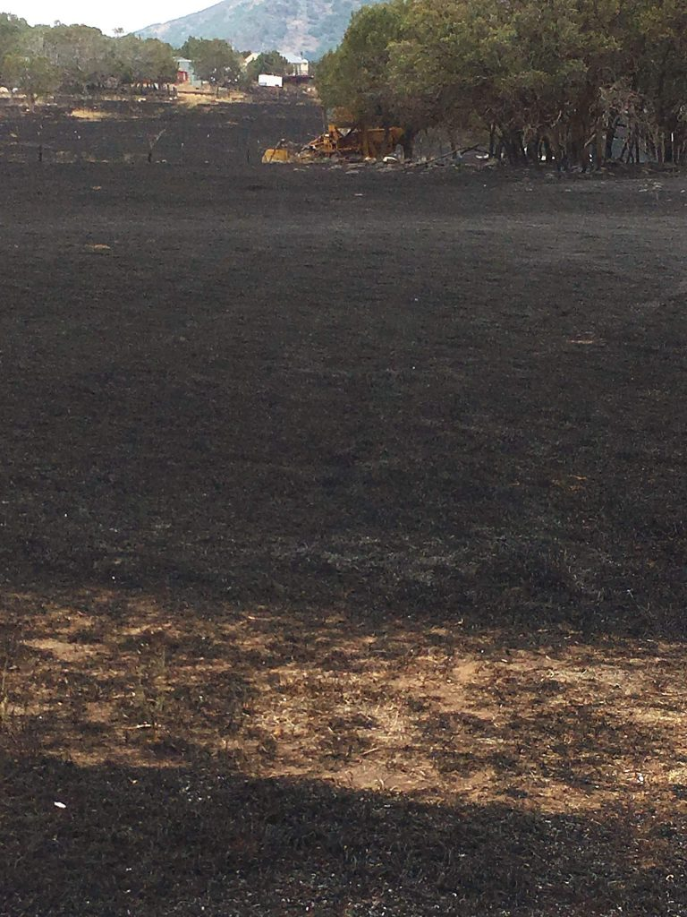 The Lake Christine Fire singed the irrigated meadow at the Kim family ranch and consumed about 30 trees in July 2018.