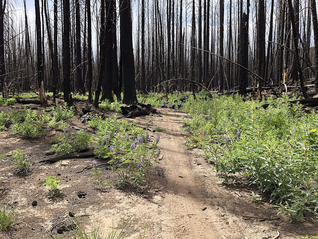 Healing has been slow along Forest Service Trail 1911 at the top of Basalt Mountain, as this view from Sunday shows. The burn severity was the worst in the Lake Christine Fire at the mountaintop.