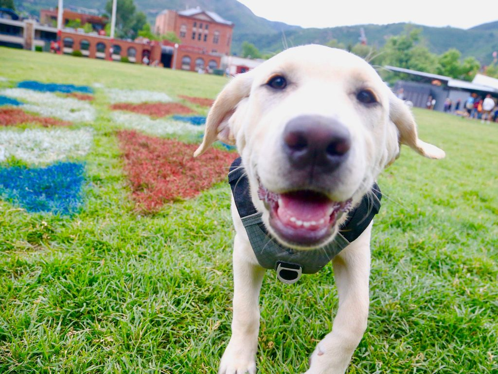 A curious puppy plays at Wagner Park on Saturday, July 4, 2020, in downtown Aspen. This year's Fourth of July celebration was much quieter and without a parade due to the coronavirus pandemic. (Photo by Austin Colbert/The Aspen Times)