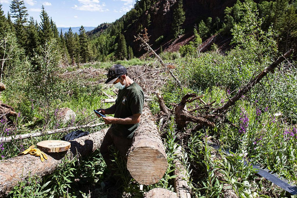 Brian Lazar enters data collected from avalanche debris into an app while working up East Snowmass Trail for the Colorado Avalanche Information Center on Tuesday, July 7, 2020. The app was created by Mike Cooperstein and allows the crew to enter the data collected while on the job instead of transcribing notes into the system after a work day.(Kelsey Brunner/The Aspen Times)